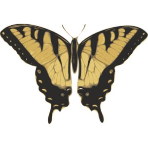 jbruce butterfly  papilio turnus  top view Thumbnail